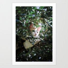 Monchique - The Wild Cat Art Print