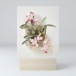 Reichenbachia: Orchids Illustrated and Described Mini Art Print