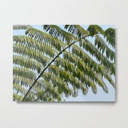 Tree fern branches Metal Print