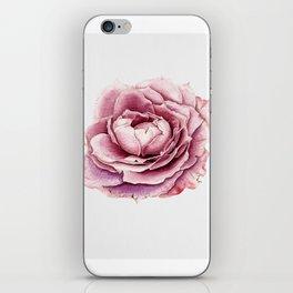 Purple Rose In bloom iPhone Skin