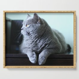 British shorthair fat cat indoor portrait. Serving Tray