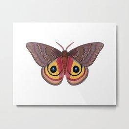io moth (Automeris io) female specimen 1 Metal Print