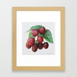 Sour Cherry, watercollor Framed Art Print