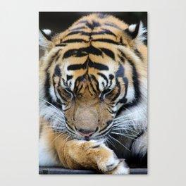 Milk Paws Canvas Print