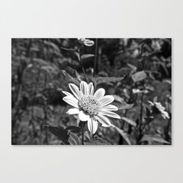 Unsaturated Canvas Print