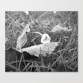 Flora Series - a frosty morning - Canvas Print