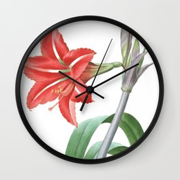 HIGHEST QUALITY botanical poster of Amaryllis Brasiliensis Wall Clock