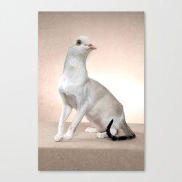 White Catbird Canvas Print