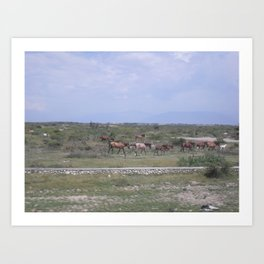Horses in Haiti Art Print