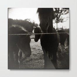 { pony pals } Metal Print