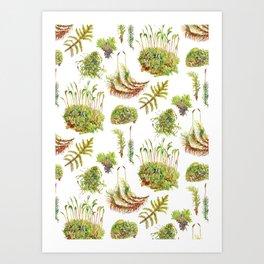 Mosses Art Print