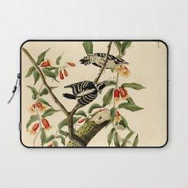 Downy Woodpecker (Dryobates pubescens) Laptop Sleeve