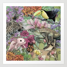 Flora and Fauna of Mexico Art Print