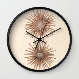 Naturalist Sea Urchins Wall Clock