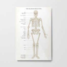 Skeleton - White Metal Print