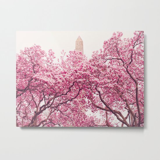 New York City - Central Park - Cherry Blossoms Metal Print