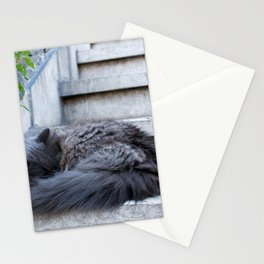 Ash Cat. Stationery Cards