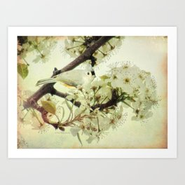 Tufted Titmouse Spring Flower Farmhouse Art Country Home Decor A132 Art Print