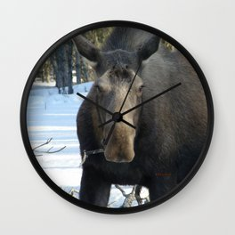 Moose Munching Poplar Lunch Wall Clock