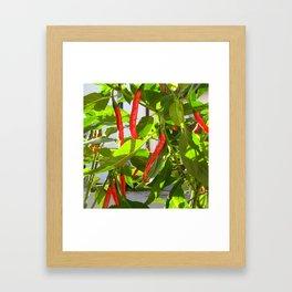 Hot peppers Framed Art Print