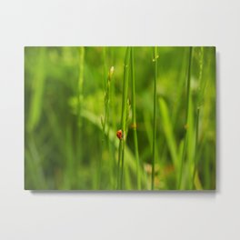 Ladybug in the Jungle Metal Print