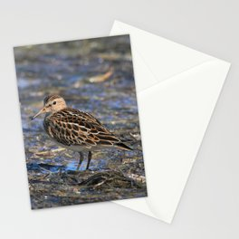 Party with Pectoral Sandpipers Stationery Cards