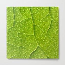 Green Leaf Texture With Visible Stomata Covering The Outer Epidermis Layer Metal Print