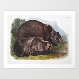 Grizzly Bear (Audubon) Art Print