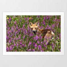 Tip Toe Through the Fireweed Art Print