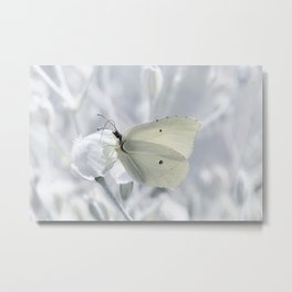 Butterfly White 80 Metal Print