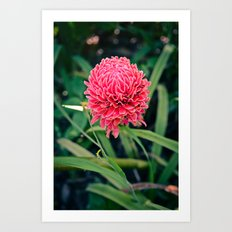 Tropical Flower: Thailand Art Print