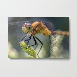 Dragonfly Closeup Metal Print