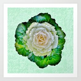 Beige Cabbage from the Garden Art Print