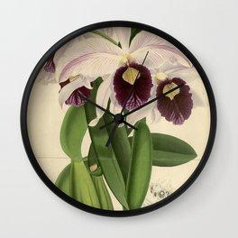 The Orchid Album - Dendrobium Suavissimum Wall Clock