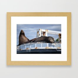 Sea Lion in the Puget Sound Framed Art Print