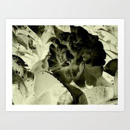 The heart of a camellia Art Print