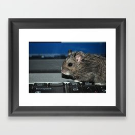hamster on a keyboard Framed Art Print