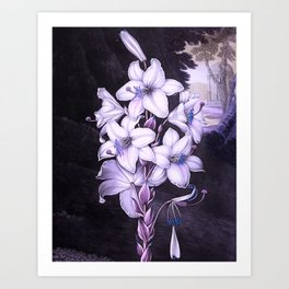 The White Lily w/ Variegated-leaves Lavender Temple of Flora Art Print