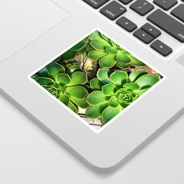 3 Succulents Sticker