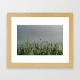 Old bullrush on a pond in the mist. Framed Art Print