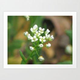 White Spring Flowers Art Print