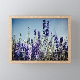 Delphinums, fairbanks alaska Framed Mini Art Print