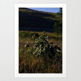 SD Sunflower Art Print