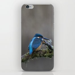 Kingfisher on a Branch iPhone Skin