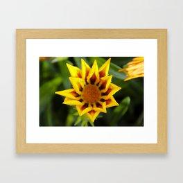 Yellow Flower in the Rain Framed Art Print