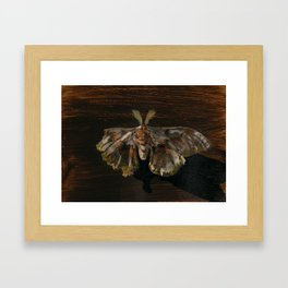 Moth Prophecy Framed Art Print