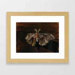 Moth Prophecy Framed Art Print