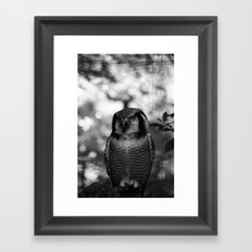 Owl series no.2 Framed Art Print