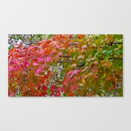 Beautiful Fall Leaves Canvas Print