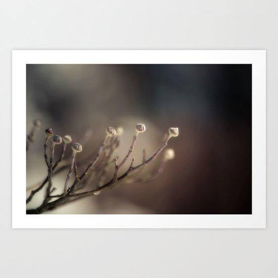 A Winter's Promise Art Print